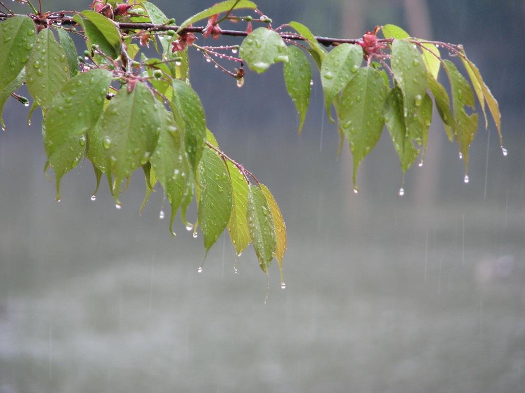 фото дождя весной вес пчелиные домики обрабатывает
