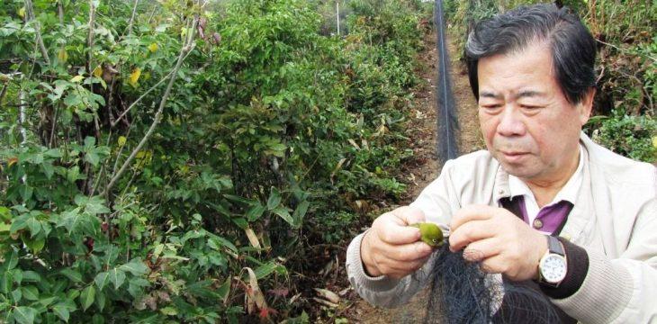 Проект «Совместные исследования перелетных птиц префектуры Тояма и Приморского края»