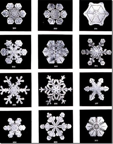 sneg 5 Wilson Bentley