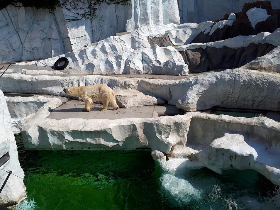 Зоопарк Уэно 2