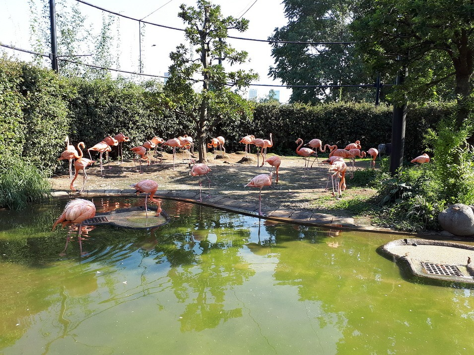 зоопарк Уэно