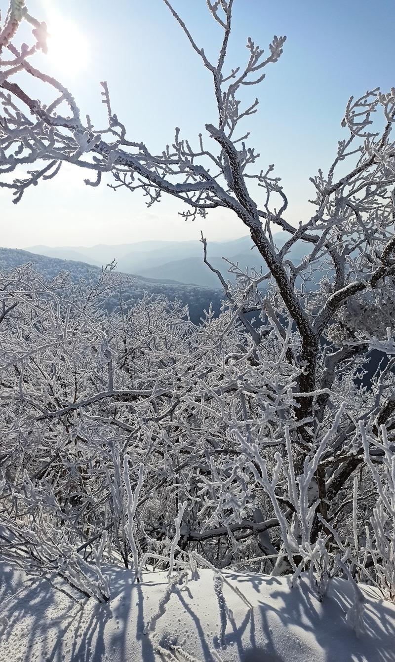 sneg ars